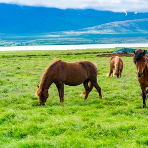 Mise au vert en Islande