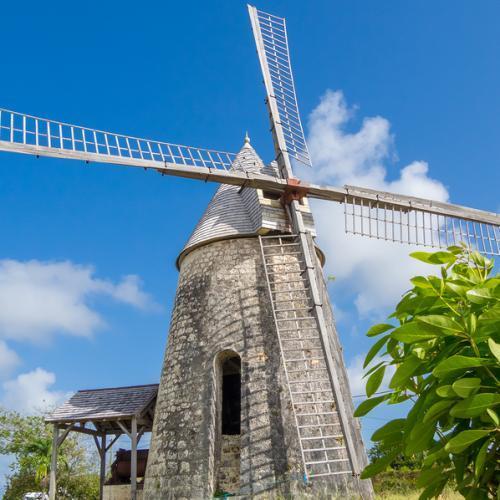 Guadeloupe : Le papillon des antilles