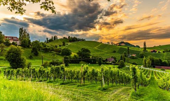 Burgenland & Styrie : La Dolce vita en Autriche
