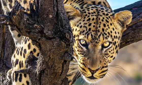 Namibie La nature à l'état brut