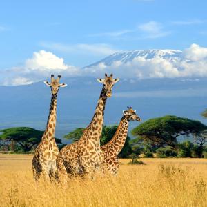 Safari privé au Kenya