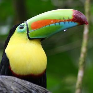 Eco tour Costa Rica