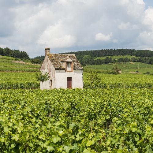 Mise au vert en Bourgogne