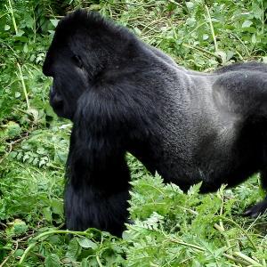 Eco tour Rwanda