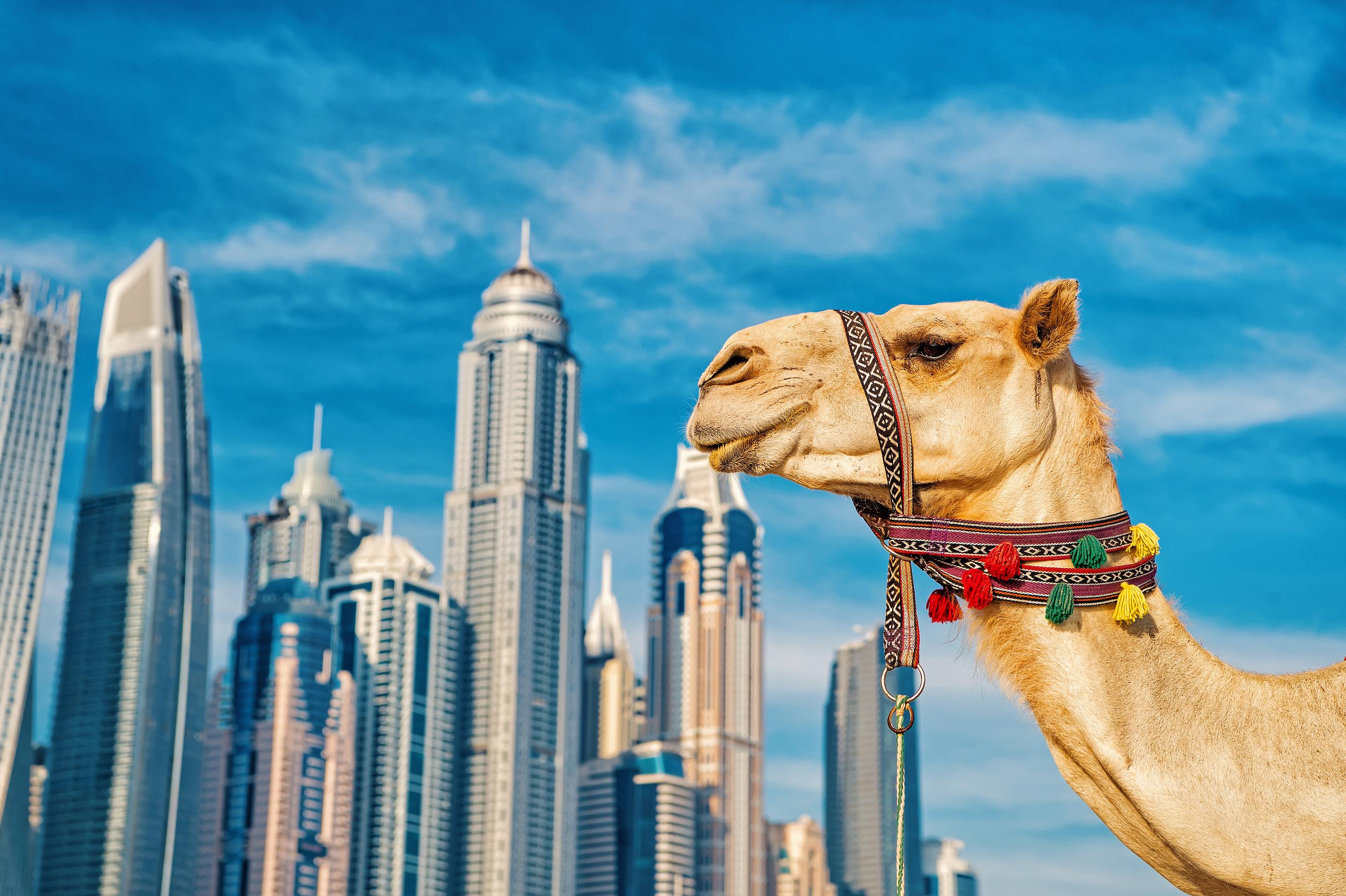 Voyage aux Emirats : entre tradition et modernité